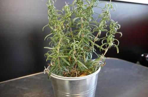 Deko bestehend aus einer unechten Topfpflanze bei Hallo Pizza!